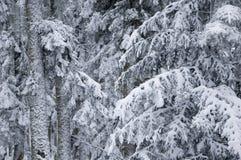 Forêt dans l'hiver. Photographie stock