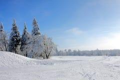 Forêt dans l'horizontal neigeux photos stock