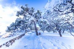 Forêt dans la beauté en hiver Images libres de droits