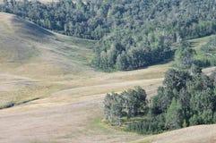 Forêt dans la cavité entre les collines Images stock