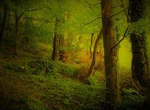 Forêt dans la montagne image stock