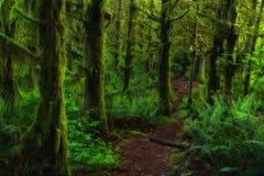 Forêt dans la mousse, Washington State Photographie stock libre de droits