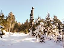 Forêt dans la paix Images libres de droits