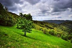 Forêt dans la réserve carpathienne Photographie stock