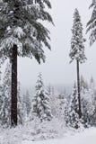 Forêt dans la tempête Photographie stock