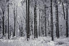 Forêt dans la tempête de neige Images libres de droits