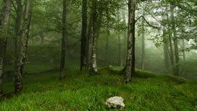 Forêt dans le brouillard Photo libre de droits