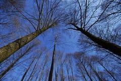 Forêt dans le ciel Image libre de droits