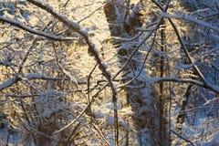 Forêt dans le contre-jour Photo stock