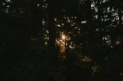 Forêt dans le coucher du soleil photo stock