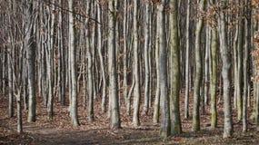 Forêt dans le jardin de château, Alnarp Photo stock