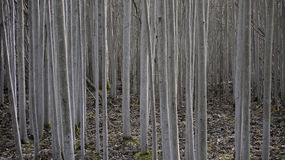 Forêt dans le jardin de château, Alnarp image stock