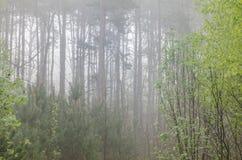 Forêt dans le matin brumeux image stock