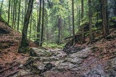 Forêt dans le paradis slovaque Images libres de droits