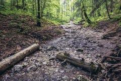 Forêt dans le paradis slovaque Image stock