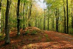 Forêt dans le paysage d'automne poland image libre de droits