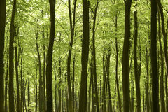 Forêt dans le printemps. Photo stock