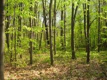 Forêt dans le printemps Image libre de droits