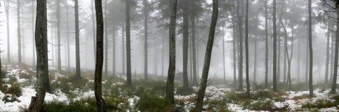 Forêt dans le regain Photo stock