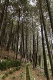 Forêt dans le temple Busan Corée Photo stock