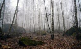 Forêt dans le temps de matin Images libres de droits