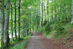 Forêt dans le Tirol, Autriche Photographie stock libre de droits