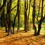 Forêt dans les couleurs de l'automne Photographie stock libre de droits