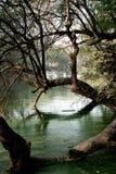 forêt dans les eaux Images libres de droits
