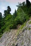 Forêt dans les montagnes Image libre de droits
