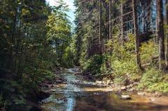 Forêt dans les montagnes carpathiennes Photographie stock libre de droits