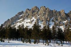Forêt dans les montagnes d'Ural image libre de droits