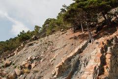 Forêt dans les montagnes de Gelendzhik Photographie stock libre de droits