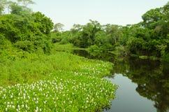 Forêt dans Pantanal Image stock