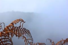 Forêt dans un brouillard Photographie stock