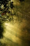 Forêt dans une fumée Photographie stock