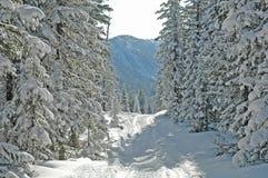 Forêt de Baikal Images libres de droits