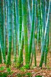 Forêt de bambou du Japon Image libre de droits