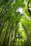 Forêt de bambou du Japon Image stock