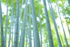 Forêt de bambou de vert de fond de nature photo libre de droits