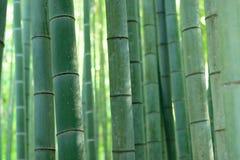 Forêt de bambou de vert de fond de nature photos libres de droits