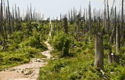 Forêt de Bavarois de stationnement national Images libres de droits