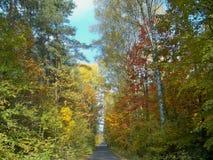 Forêt de Beatifuul en Pologne photo stock