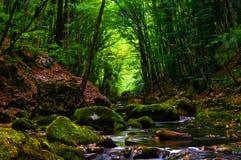 Forêt de bidon de Strean Photographie stock
