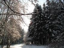 Forêt de Bitsevsky Images libres de droits