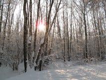 Forêt de Bitsevsky Photo libre de droits