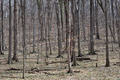 Forêt de bois dur centrale des Etats-Unis images stock