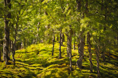 Forêt de bonsaïs Photo stock