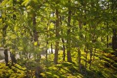 Forêt de bonsaïs Photo libre de droits