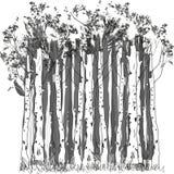Forêt de bouleau Image stock