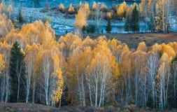 Forêt de bouleau d'automne de royaume des fées photos stock